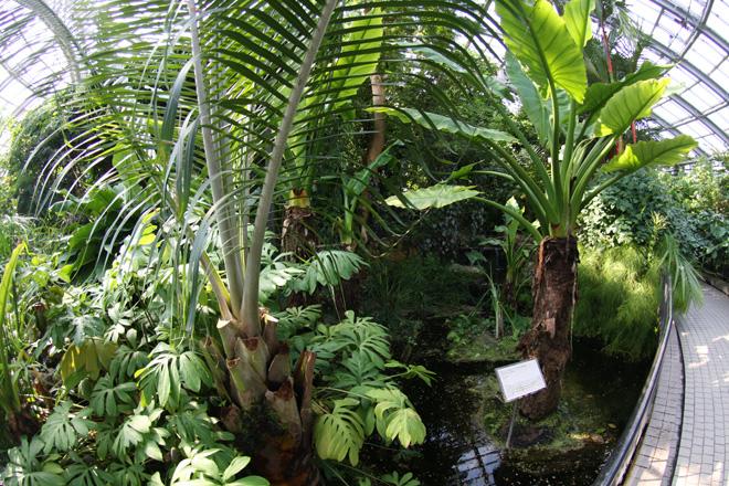 京都府立植物園 温室