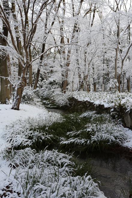 雪の糺の森