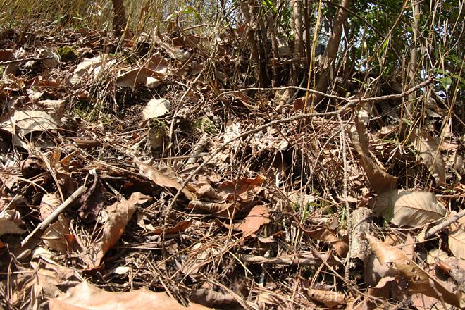 ホソミオツネントンボの居た環境