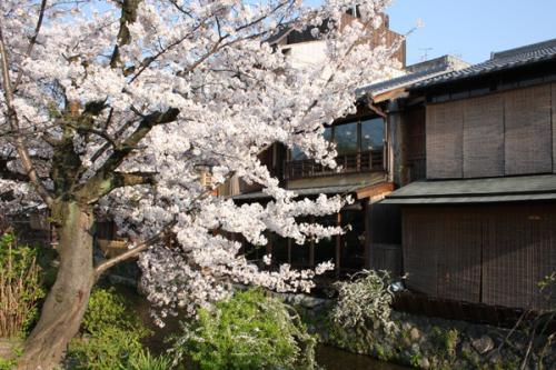 09/04/07 桜02
