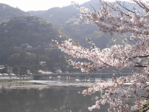09/04/08 桜01