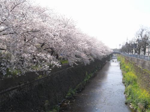 09/04/11 桜03